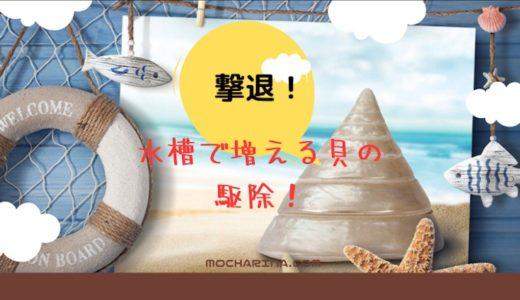どんな方法で駆除する⁈水槽で増え続けるやっかい者の貝を撃退!
