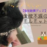 食欲不振のモルモット、シニア期のモカちゃん動物病院へ行く【強制給餌グッズ】