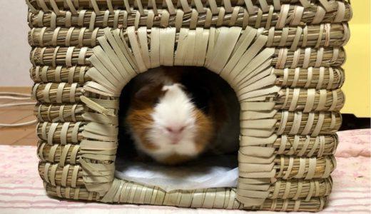 モルモット親子・みんなのお気に入り「チモシーの小屋」
