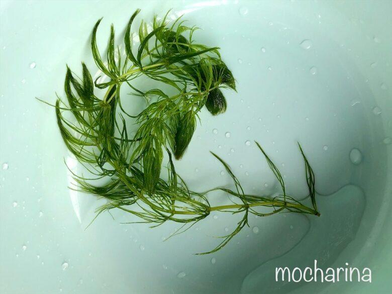 f:id:mocharina09:20200708150355j:image